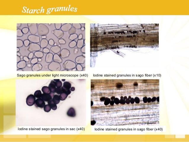 Comparison  of  some  starch  proper.es   } Amylose  content:  26  –  30%  (sago);  28%  (corn),...