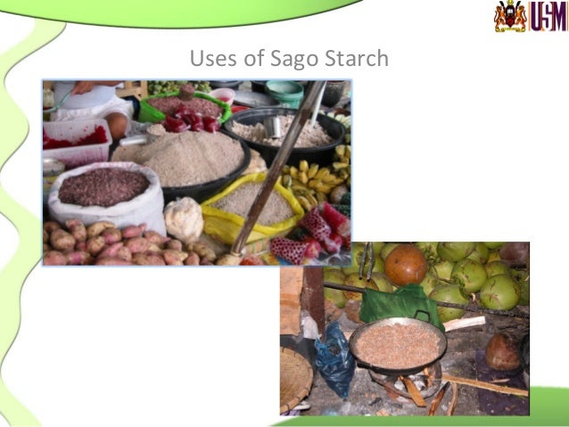 Uses  of  Sago  Starch