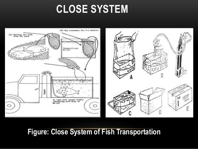 fish transportation