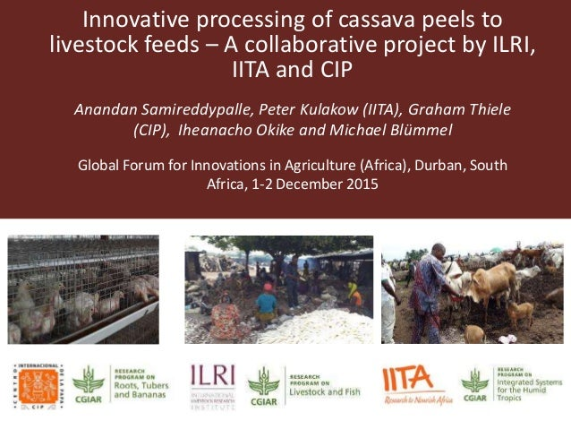 Innovative processing of cassava peels to livestock feeds – A collaborative project by ILRI, IITA and CIP Anandan Samiredd...
