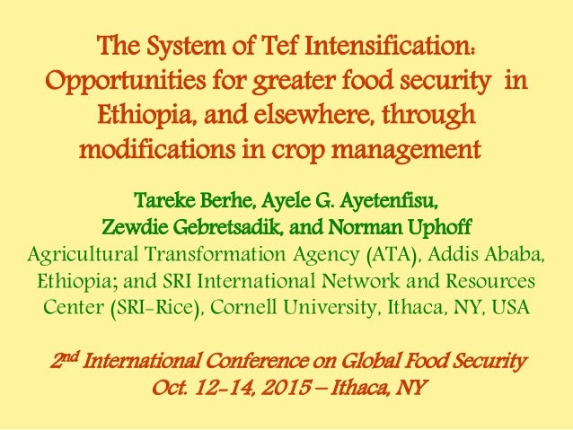 The System of Tef Intensification: Opportunities for greater food security in Ethiopia, and elsewhere, through modificatio...