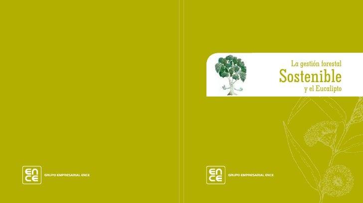 La gestión forestal Sostenible     y el Eucalipto