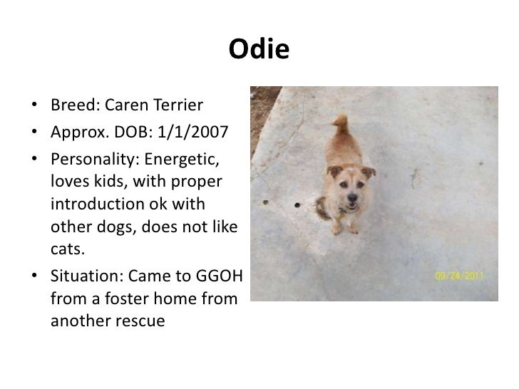 Odie• Breed: Caren Terrier• Approx. DOB: 1/1/2007• Personality: Energetic,  loves kids, with proper  introduction ok with ...