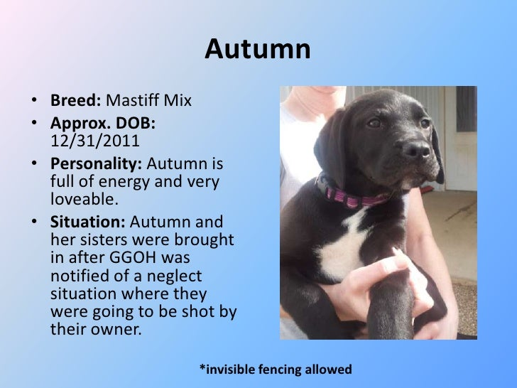 Autumn• Breed: Mastiff Mix• Approx. DOB:  12/31/2011• Personality: Autumn is  full of energy and very  loveable.• Situatio...