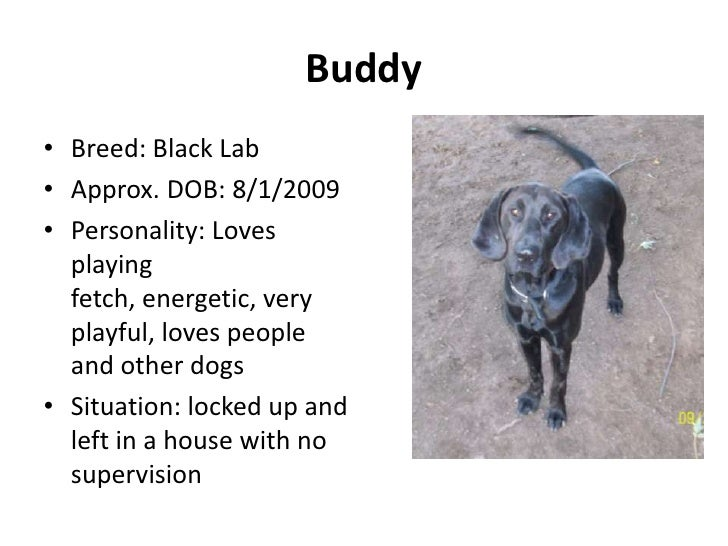Buddy• Breed: Black Lab• Approx. DOB: 8/1/2009• Personality: Loves  playing  fetch, energetic, very  playful, loves people...