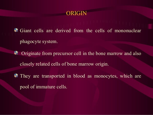 ORIGIN Giant cells are derived from the cells of mononuclear phagocyte system. Originate from precursor cell in the bone m...