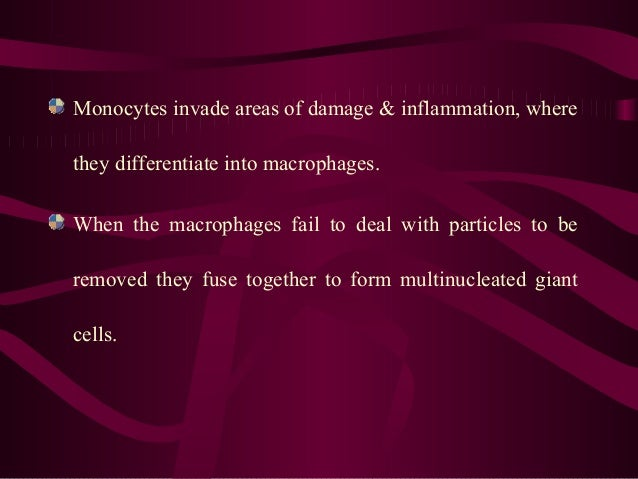 Monocytes invade areas of damage & inflammation, where they differentiate into macrophages. When the macrophages fail to d...