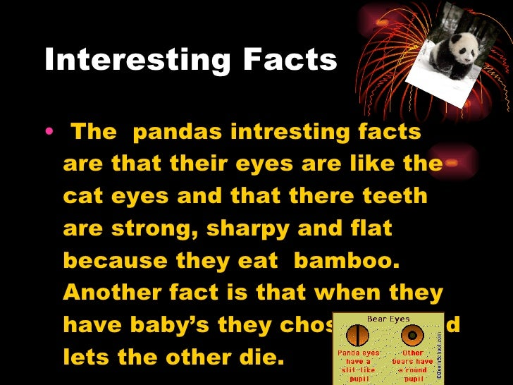 Information about the habits and life of the giant panda bear