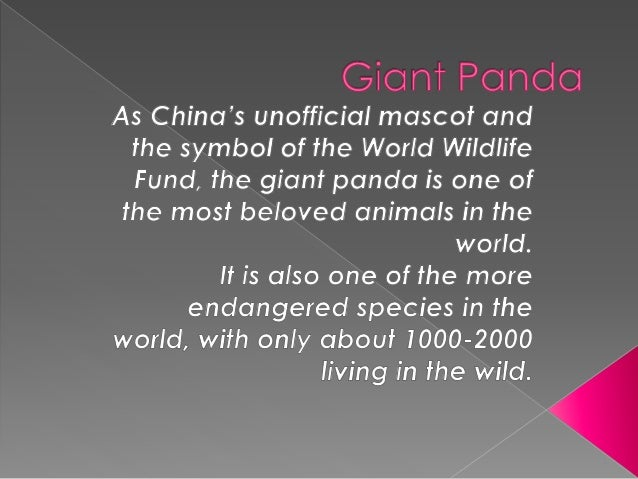  Giant pandas are identified by their distinctive black and white coloring. Their ears, muzzle, eyes, shoulders and legs ...