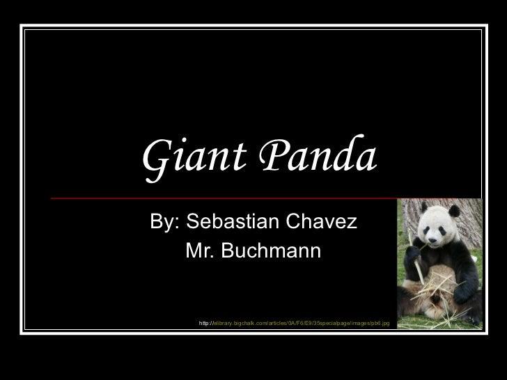 Giant Panda By: Sebastian Chavez Mr. Buchmann http:// elibrary.bigchalk.com/articles/0A/F6/E9/35specialpage/images/pb6.jpg