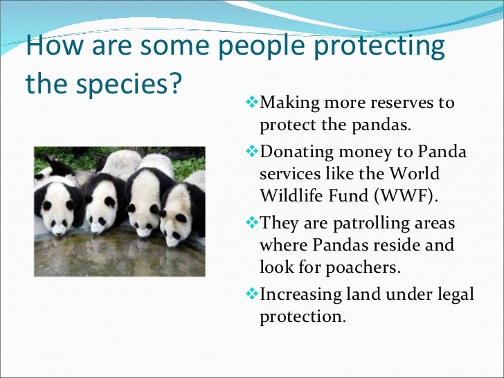 Reserves for the Protection of the Giant Panda Essay Sample