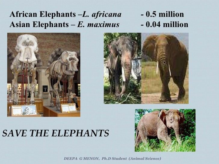 African Elephants – L. africana -  0.5 million Asian Elephants –  E. maximus  -  0.04 million DEEPA  G MENON,  Ph.D Studen...