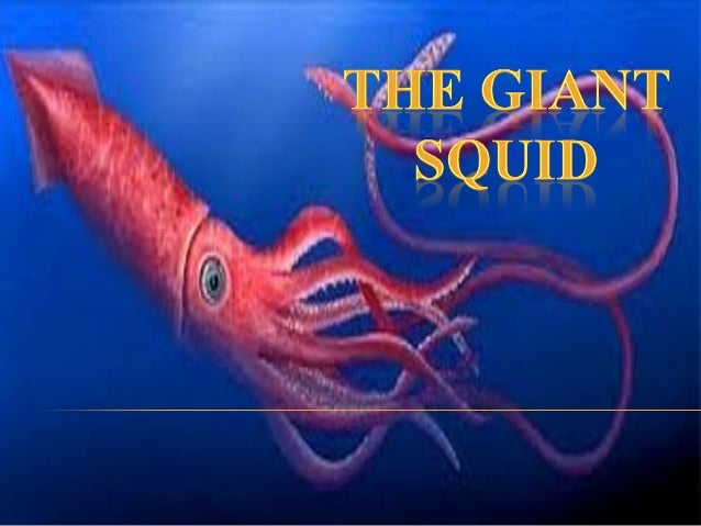  Giant squid are molluscum. They are carnivors. There are 8 species of giant squid. They are dangerous. They are weig...