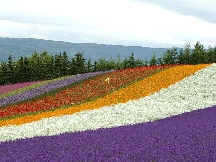 Giapponein primavera Slide 3