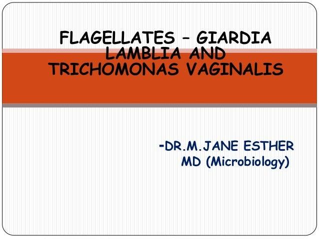 FLAGELLATES – GIARDIA LAMBLIA AND TRICHOMONAS VAGINALIS -DR.M.JANE ESTHER MD (Microbiology)