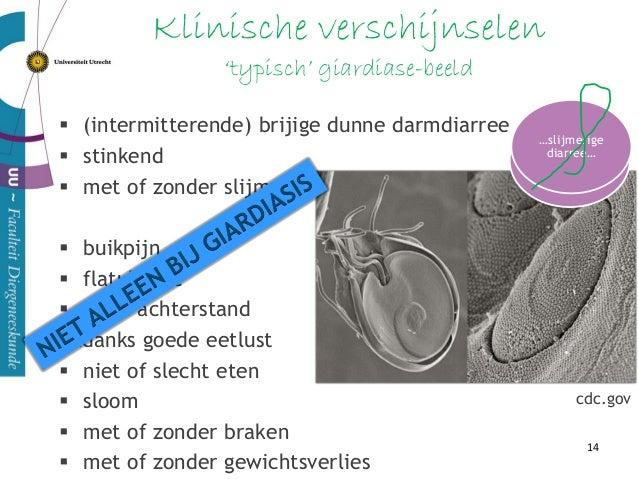 Pathofysiologie maldigestie & malabsorptie & malsecretie verkorting brush border microvilli disaccharasen ↓ trypsine inhib...