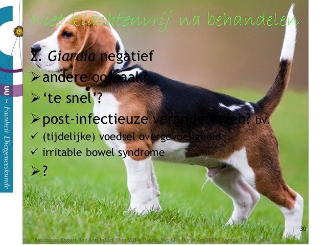 31 bacteriën en voedseldeeltjes kunnen rest van het lichaam in  (tijdelijke) voedsel overgevoeligheid  irritable bowel s...