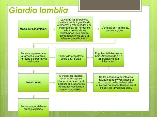 Giardia lamblia                               La vía es fecal-oral y se                             produce por la ingesti...
