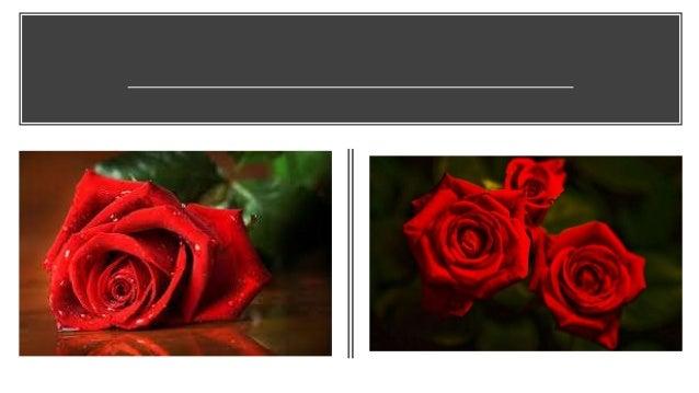 Same-Day Christmas Flower Delivery online Slide 2