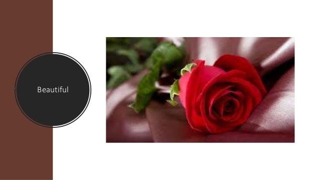 Same-Day Christmas Flower Delivery online Slide 3
