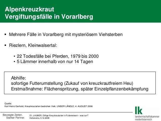 DI. J.HUMER, Giftige Kreuzkrautarten in Futterwiesen – was tun? Hohenems, 5.12.2009 Alpenkreuzkraut Vergiftungsfälle in Vo...