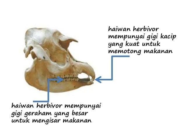 Gigi haiwan