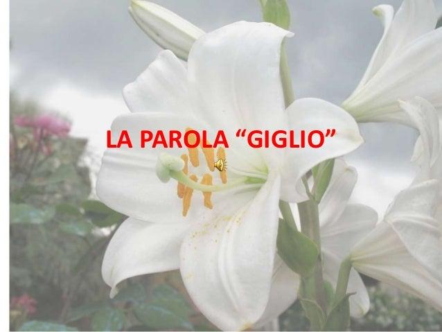 """LA PAROLA """"GIGLIO"""""""
