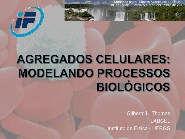 Agregados celulares: modelando processos biológicos