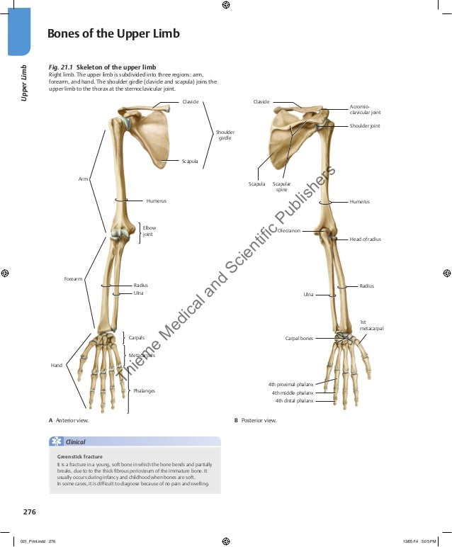 Gilroy anatomy atlas