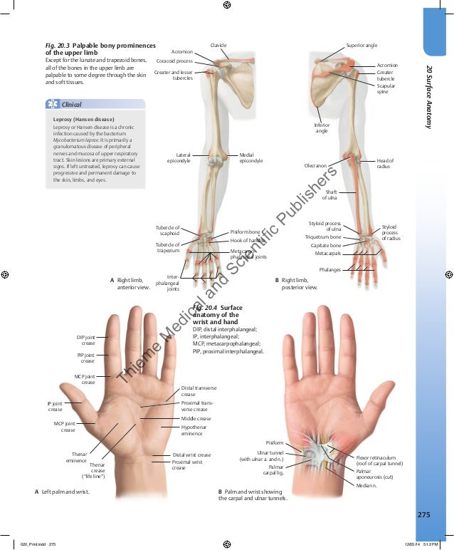Atlas of Anatomy by Gilroy