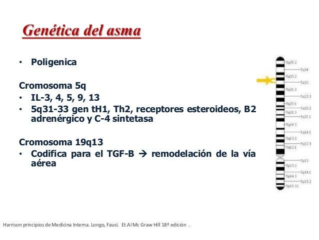 • Poligenica Cromosoma 5q • IL-3, 4, 5, 9, 13 • 5q31-33 gen tH1, Th2, receptores esteroideos, B2 adrenérgico y C-4 sinteta...