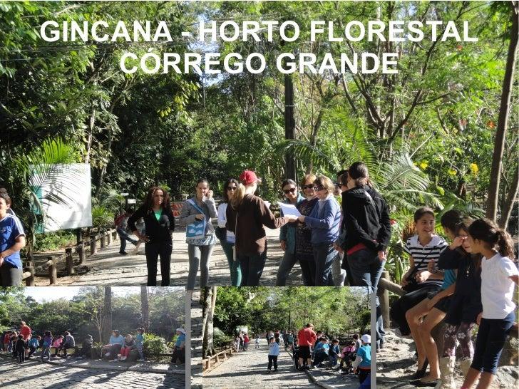 GINCANA - HORTO FLORESTAL    CÓRREGO GRANDE
