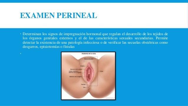 CITOLOGÍA Es un estudio microscópico de las células del aparato genital. Existen varios tipos de citología; la vaginal, la...
