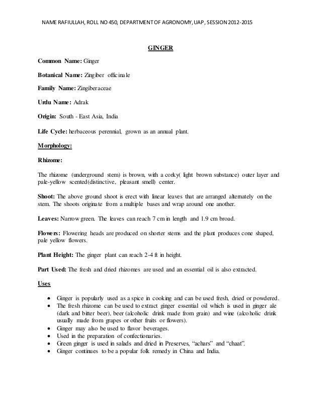 NAME RAFIULLAH,ROLL NO450, DEPARTMENT OF AGRONOMY,UAP, SESSION 2012-2015 GINGER Common Name: Ginger Botanical Name: Zingib...