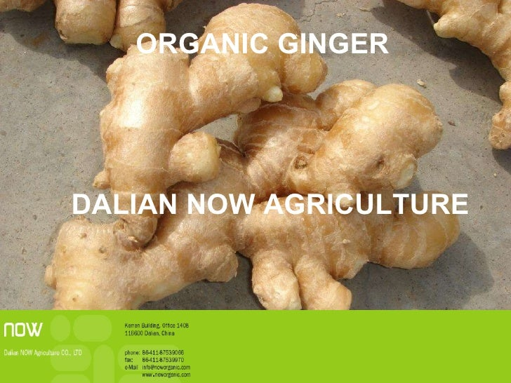 ORGANIC GINGER DALIAN NOW AGRICULTURE