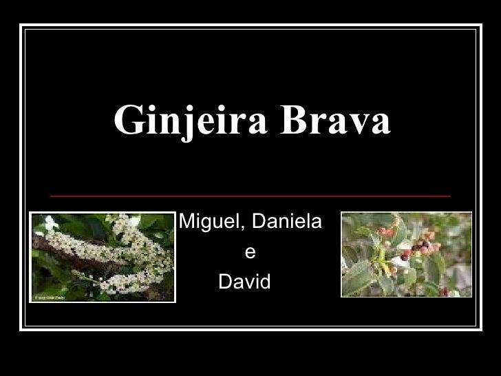 Ginjeira Brava   Miguel, Daniela          e       David