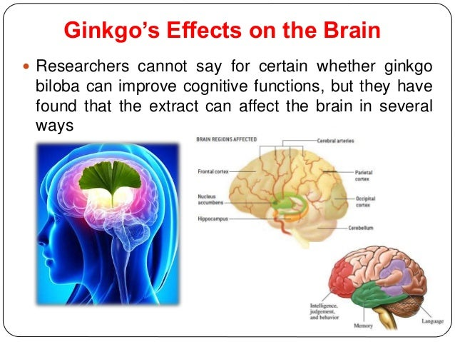 Ginkgo biloba for brain