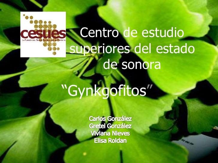 """Centro de estudio superiores del estado de sonora """" Gynkgofitos """""""