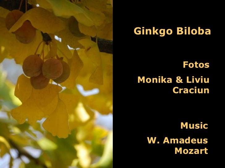 Ginkgo Biloba Fotos Monika & Liviu Craciun Music W. Amadeus Mozart