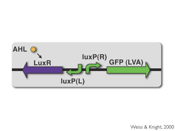 Two-population cell-cell signaling Output pathway                                 Quorum-                              Sen...