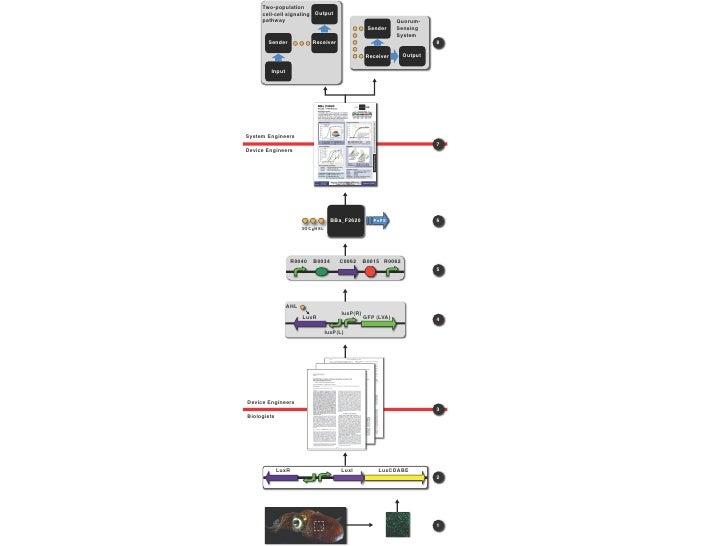 Measurement kit E   X      E0240          S   P                                                 E. coli strain     GFP rep...