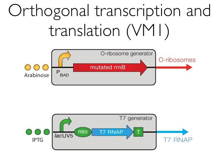 VM2.0 requires a                              lacIQ          strain                        O-ribosome generator           ...