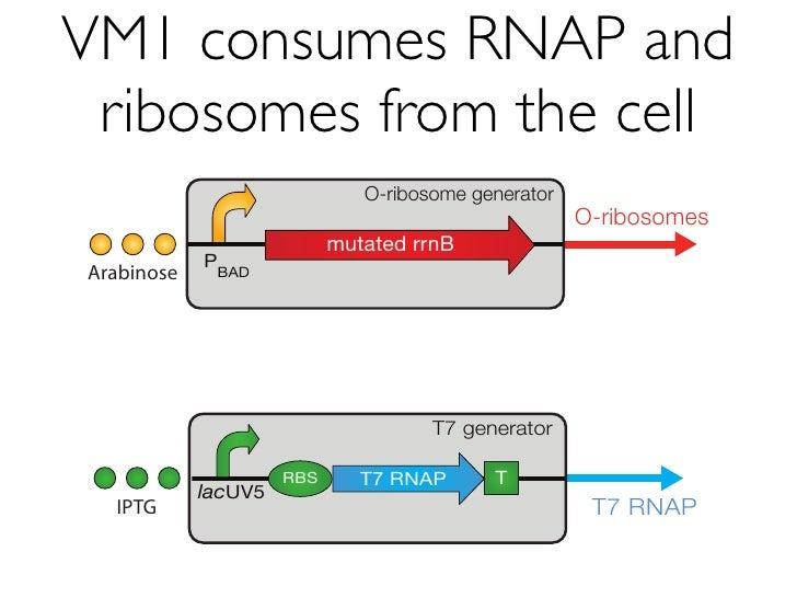 VM2.2 works in E. coli TOP10                                  2.0E+4                                             VM2.2 + R...