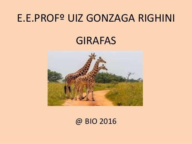 E.E.PROFº UIZ GONZAGA RIGHINI GIRAFAS @ BIO 2016