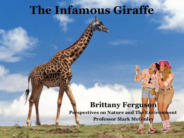The Infamous Giraffe <ul><li>Brittany Ferguson </li></ul><ul><li>Perspectives on Nature and The Environment  </li></ul><ul...