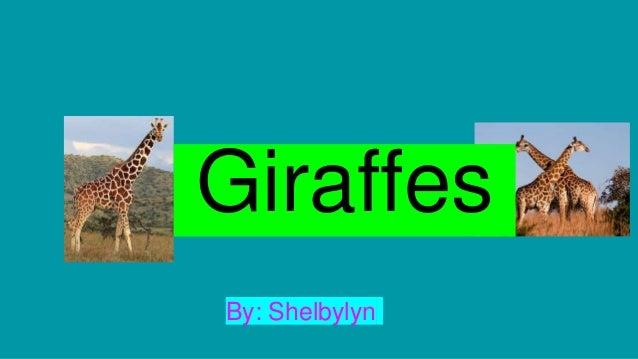By: Shelbylyn Giraffes