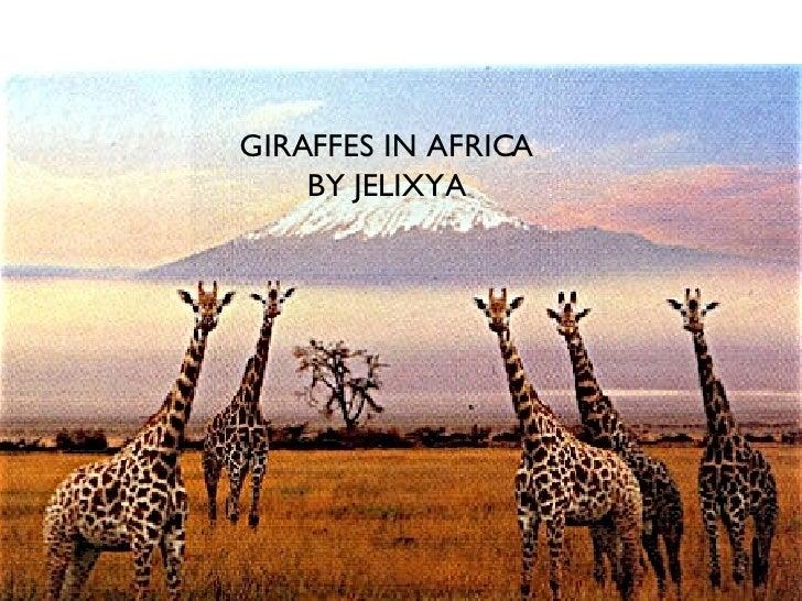 GIRAFFES IN AFRICA BY JELIXYA