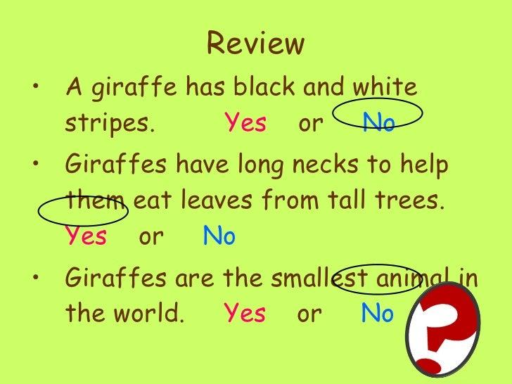 Giraffes ppt