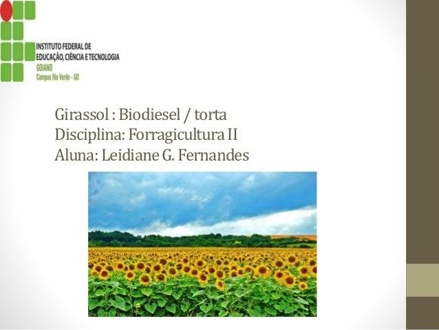 Girassol:Biodiesel/ torta Disciplina:ForragiculturaII Aluna:LeidianeG.Fernandes