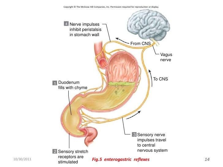 Gastro Intestinal Reflexes